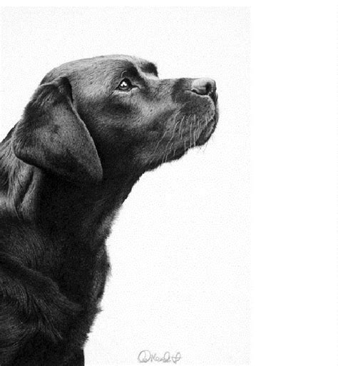 Realistic pencil drawing by Clive Meredith - Art Kaleidoscope